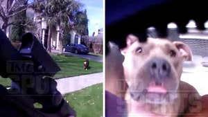 Dak Prescott Dog Attack Video, Cops Drew Assault Rifle On Pets
