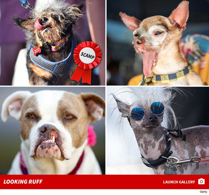 World's Ugliest Dog Contest -- Woof!