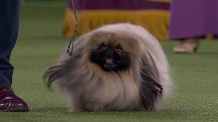 Wasabi the Pekingese Wins Best in Show at 2021 Westminster Dog Show.jpg
