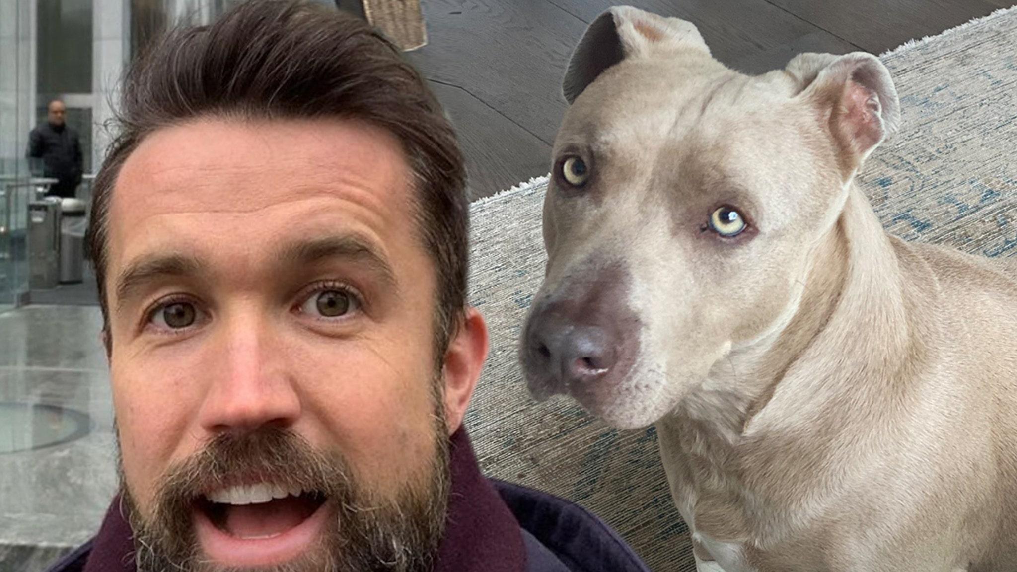 Rob McElhenney & Kaitlin Olson Rescue Dog, Reunite Him with Happy Family thumbnail