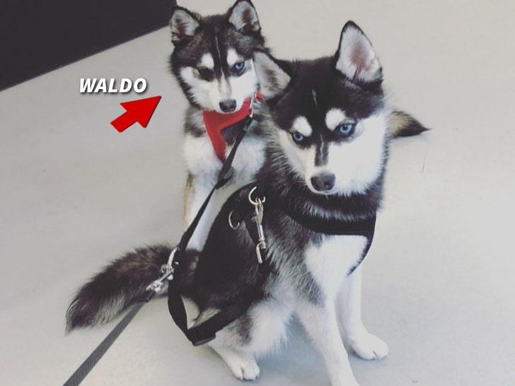 Waldo and Porky