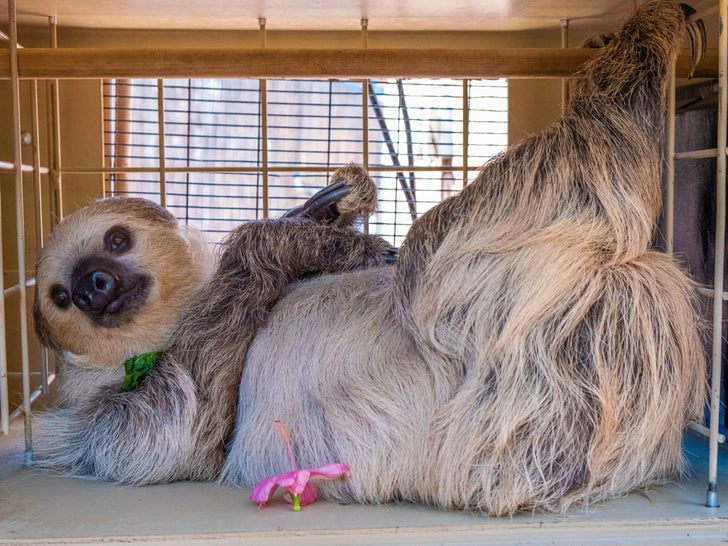 Fernando The Sloth At The Phoenix Zoo