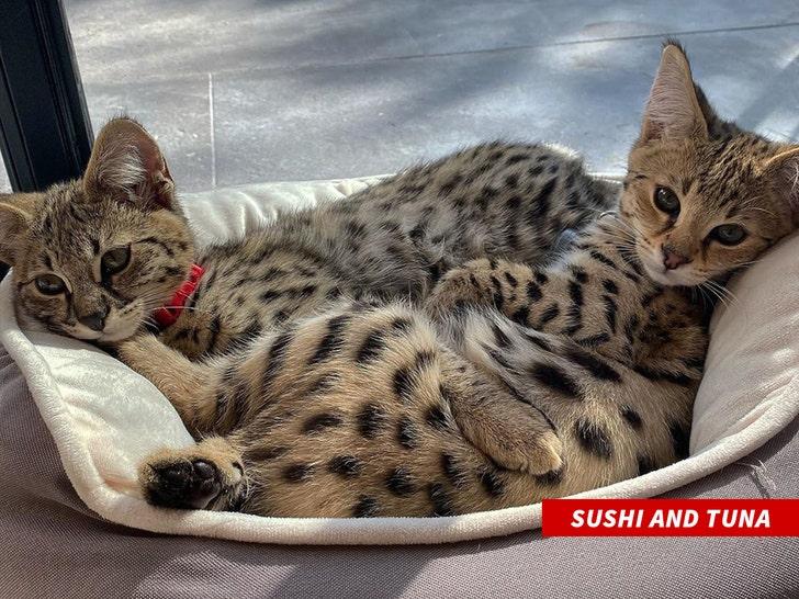 Justin Bieber Blasts PETA for Criticizing His Exotic Cat