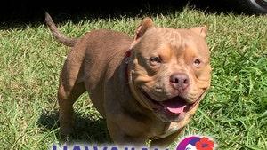 Emotional Support Dog Dies On Hawaiian Airlines Flight