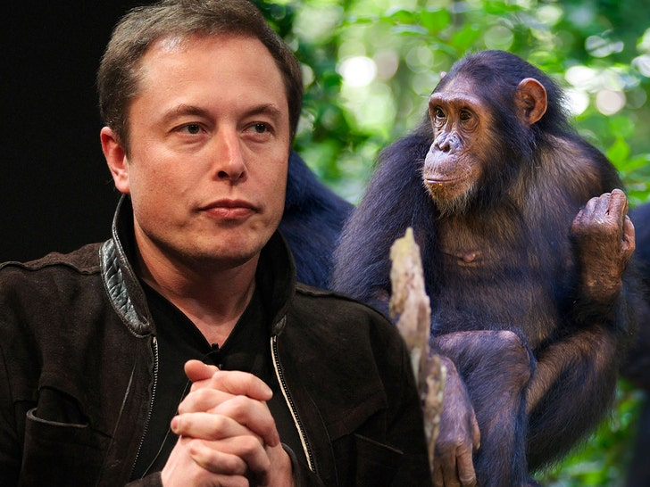 Elon Musk Says He Got Monkey to Control Computer with Its Brain