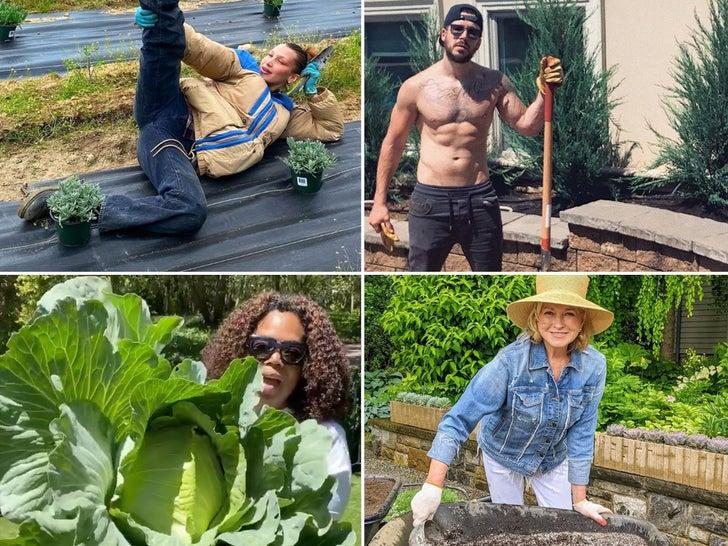 Quarantine Gardening -- Stars Going Green