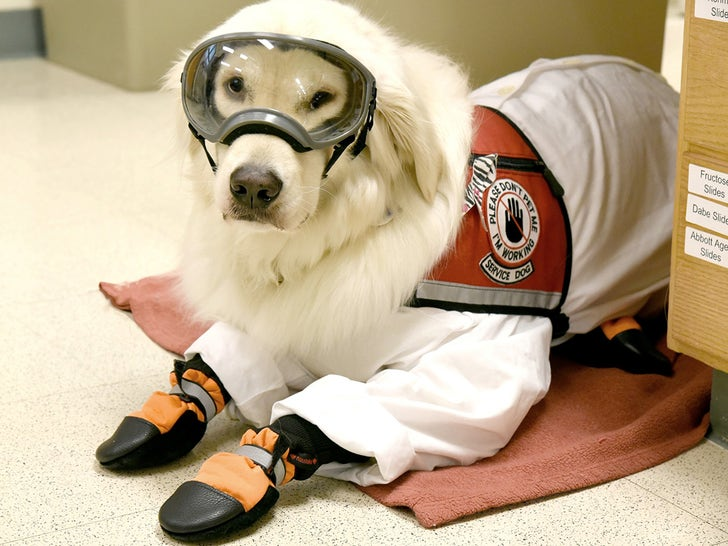 Very Good Service Dog Wears PPE