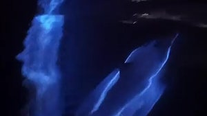 Pod of Dolphins Glows Blue in Bioluminescent Waves, Really Cool Video