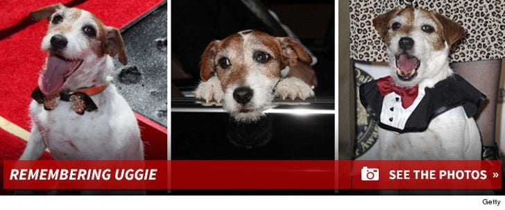 Remembering Uggie