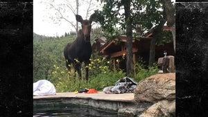 'South Park' Co-Creator Trey Parker and Family Get Super Close Moose Encounter