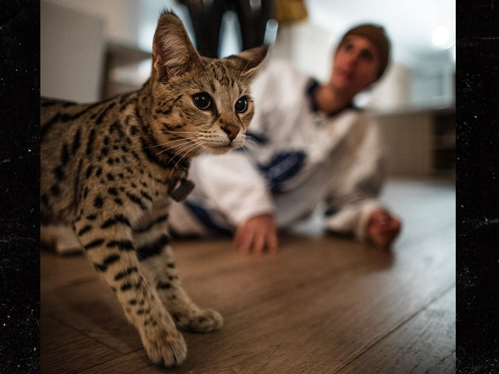 Justin Bieber Gets His Cat Back