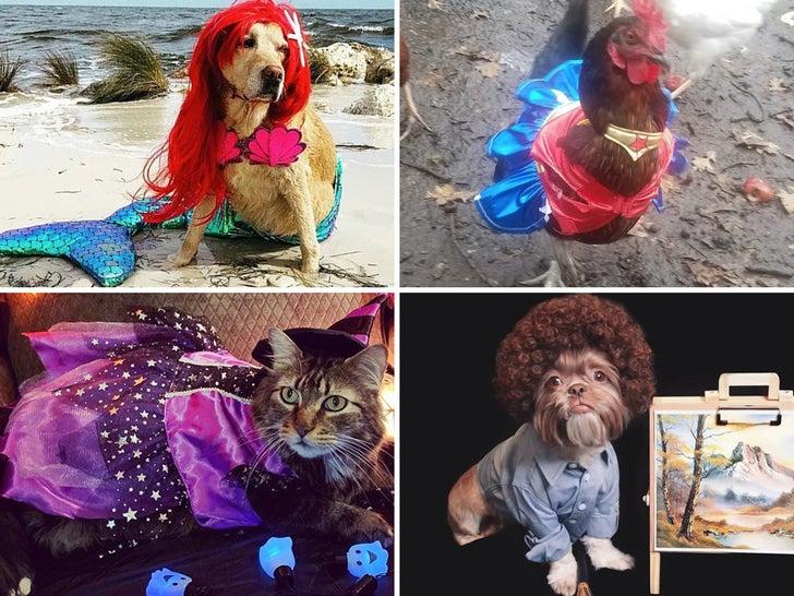 TMZ Pet Costume Sweepstakes