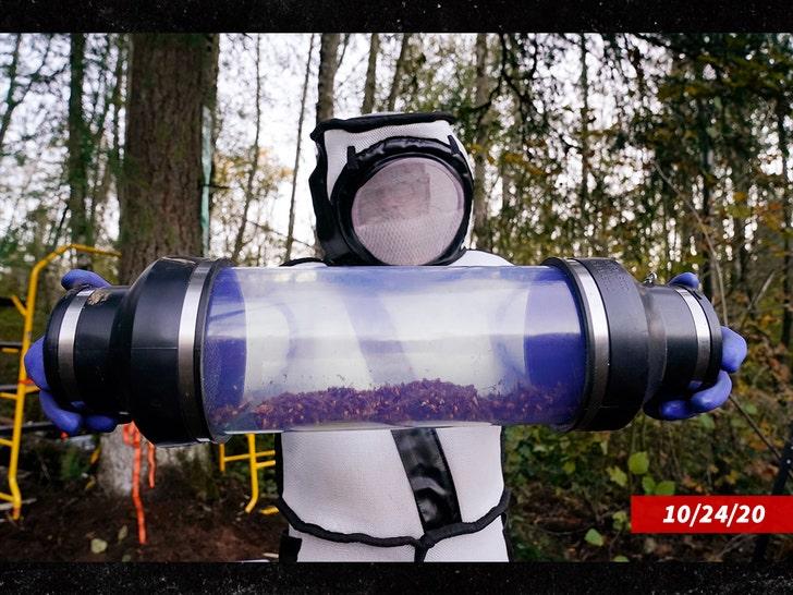 Пчеловод Тед Макфолл говорит, что битва с шершнями-убийцами еще не окончена