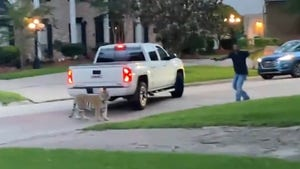 Tiger in Houston Nearly Shot by Neighbor, Police Chase Ensued