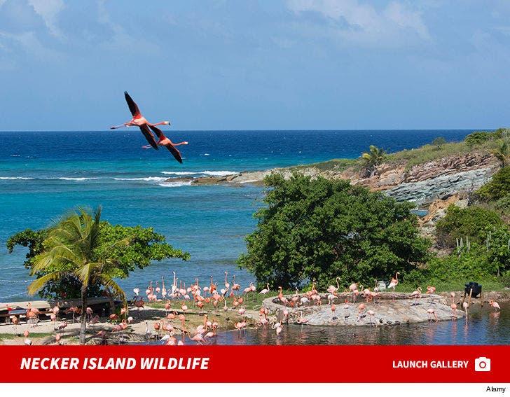 Richard Branson Necker Island Wildlife