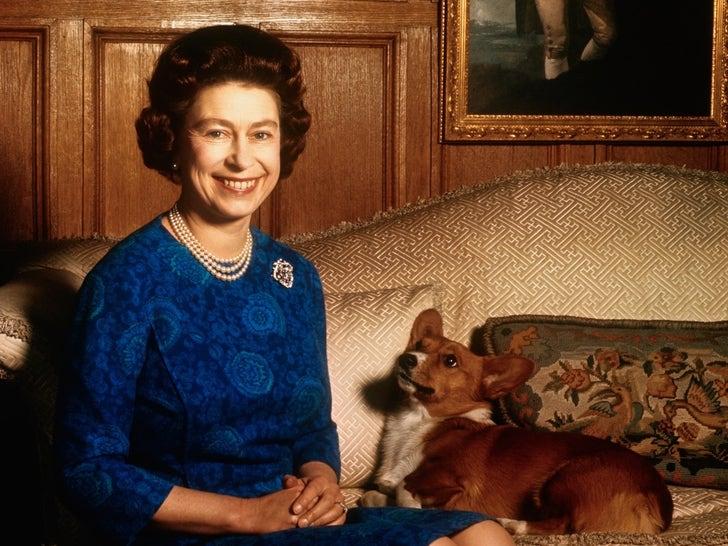 The Queen's Puppy Love