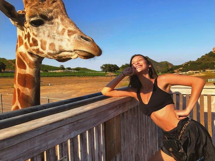 Stars With Stanley The Giraffe