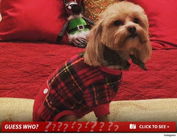 Dog Gone Adorable -- Guess Whose Pooch! -- Part 2