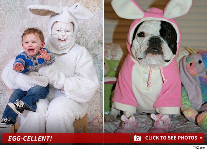 TMZ's Funny Bunny Photo Contest