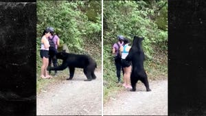 Wild Bear Castrated After Sniffing Woman's Hair at Park in Mexico