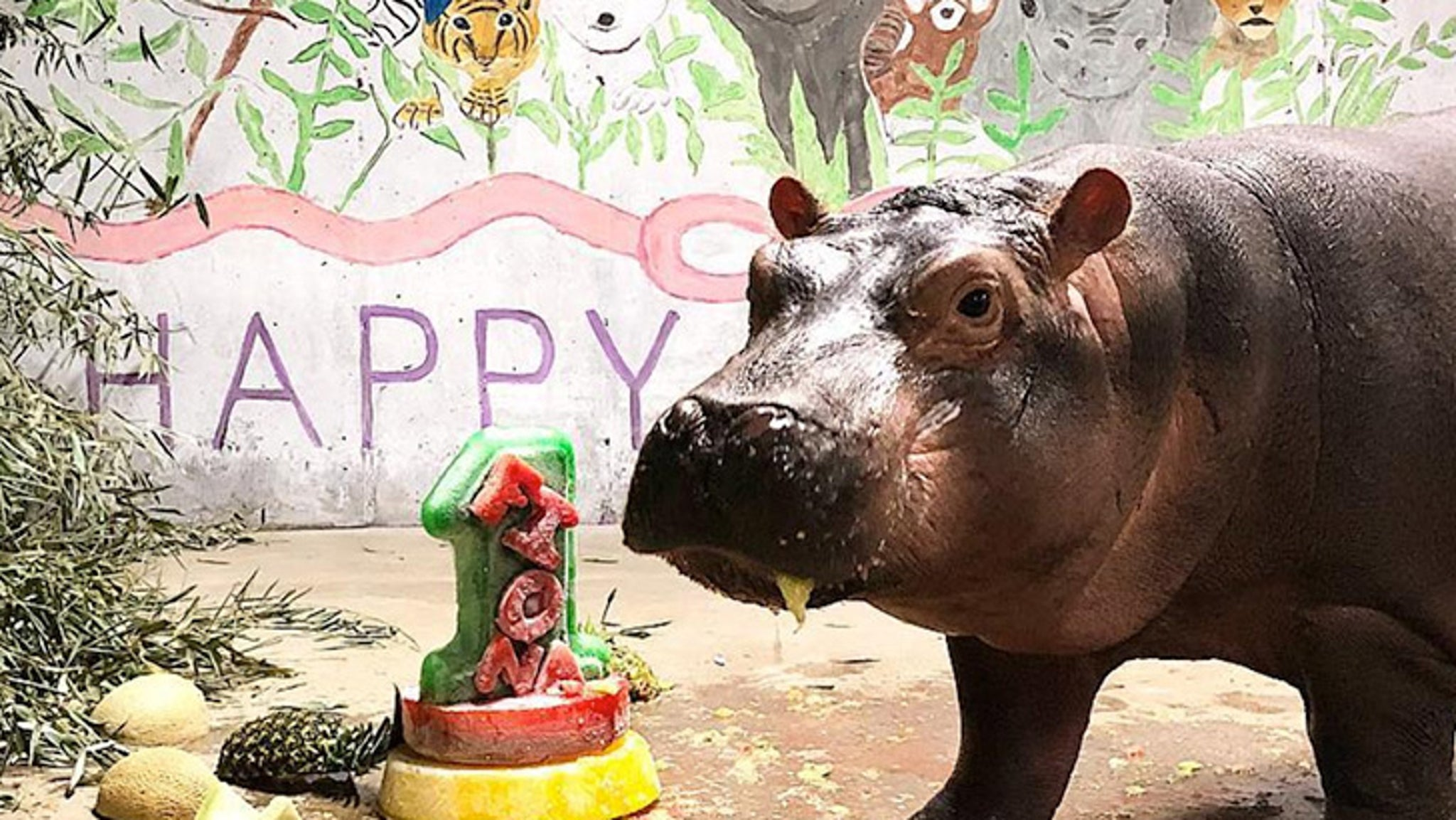 Fiona The Hippo Makes It To Her First Birthday