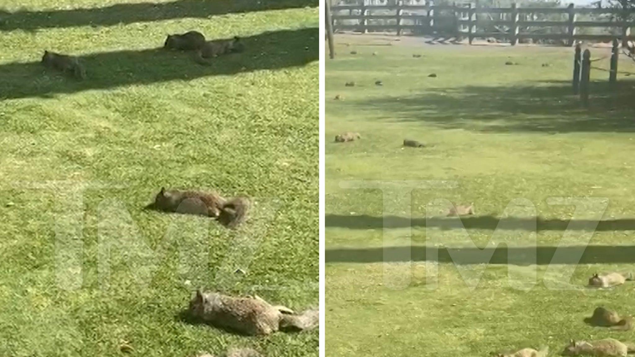 Squirrels Take Over Park in Santa Monica During California Lockdown