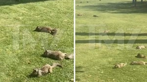 Squirrels Take Over Park in Santa Monica During California Lockdown