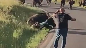 Bison Drags Woman by Her Pants in Wild Video