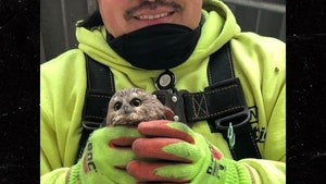 Baby Owl Found in Rockefeller Christmas Tree Doing Well