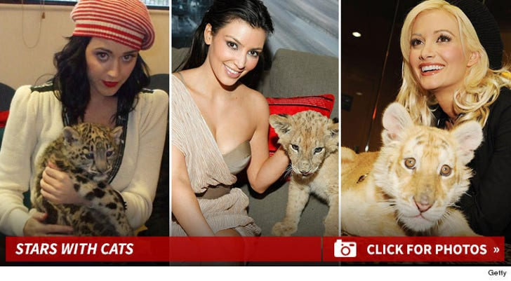 Stars and Their Feline Friends