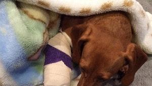 Wrestling Star Jeff Hardy -- My Cute Dog Bwoke It's Wittle Paw