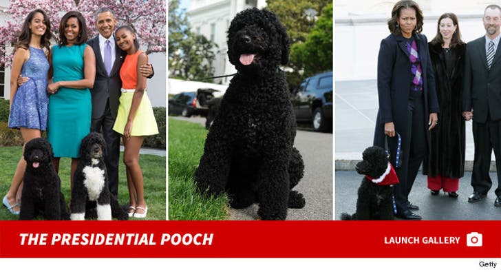 Sunny -- The Presidential Pooch