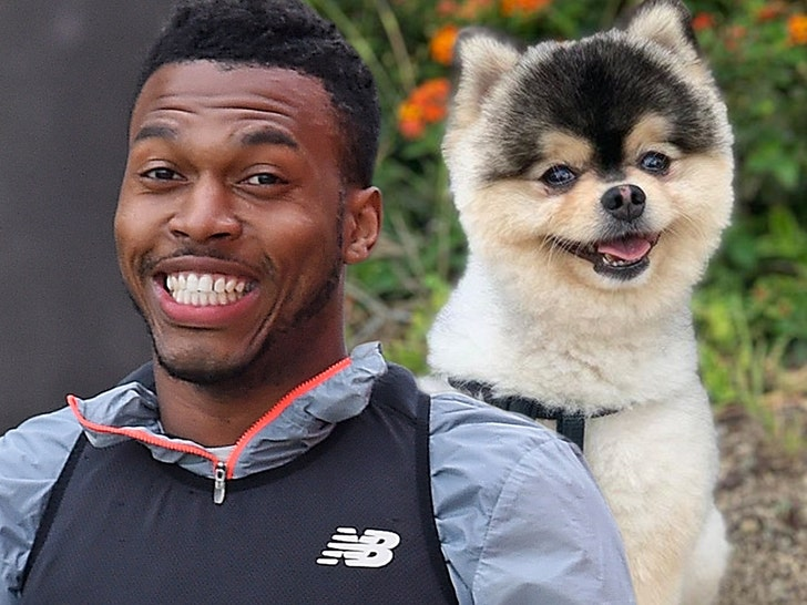 Daniel Sturridge reunited with stolen dog after social media appeal