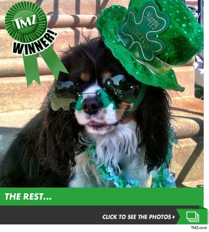 TMZ's Annual St. Paddy's Picture Contest!