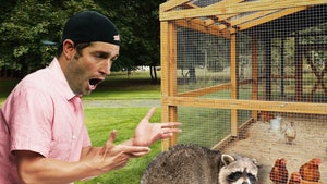 Jay Cutler's Chicken Serial Killer Revealed, Damn Raccoon!