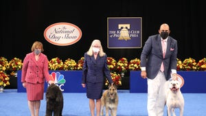 National Dog Show Looks Different Thanks to COVID-19, But Show Goes On