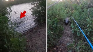 Florida Fisherman Chased By Giant Alligator In Terrifying Encounter Caught On Video
