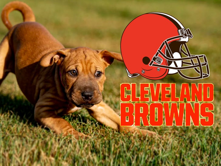 Browns Dog Adoption -- The Cleveland Canines