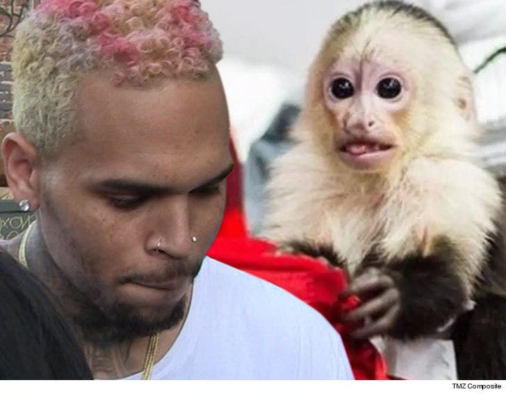Chris Brown Says Monkey Charges Should Be Tossed, She's Not