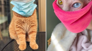 Cats Join In on Face Covering for COVID-19 Protection