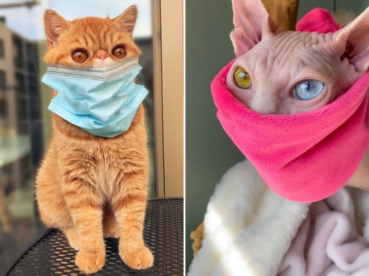 Cats Wearing Masks