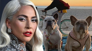 Lady Gaga's Alleged Dognappers Charged with Attempted Murder, Robbery