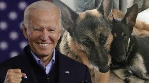 Joe Biden's Family Dogs Get Their Own Twitter Account