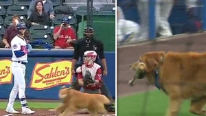 Bat Dog 'Rookie' Delays Minor League Game Rushing Onto Field, Adorable Video