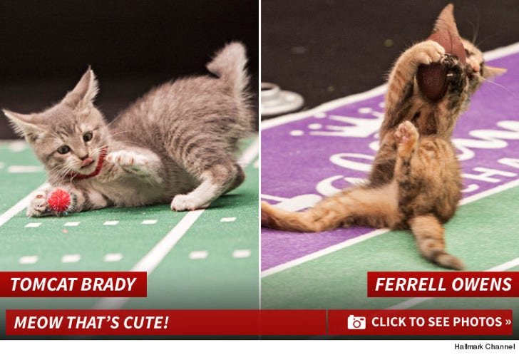 Kitten Bowl -- The Feline Photos