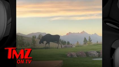 Tyler Perry Has Guest Moose in Backyard of His Home   TMZ TV.jpg