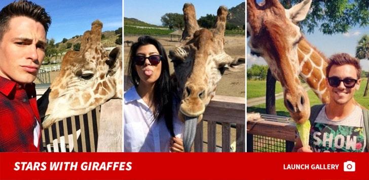 Stars Posin' With Giraffes
