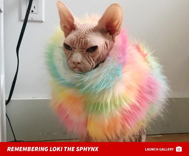 Remembering Loki The Sphynx