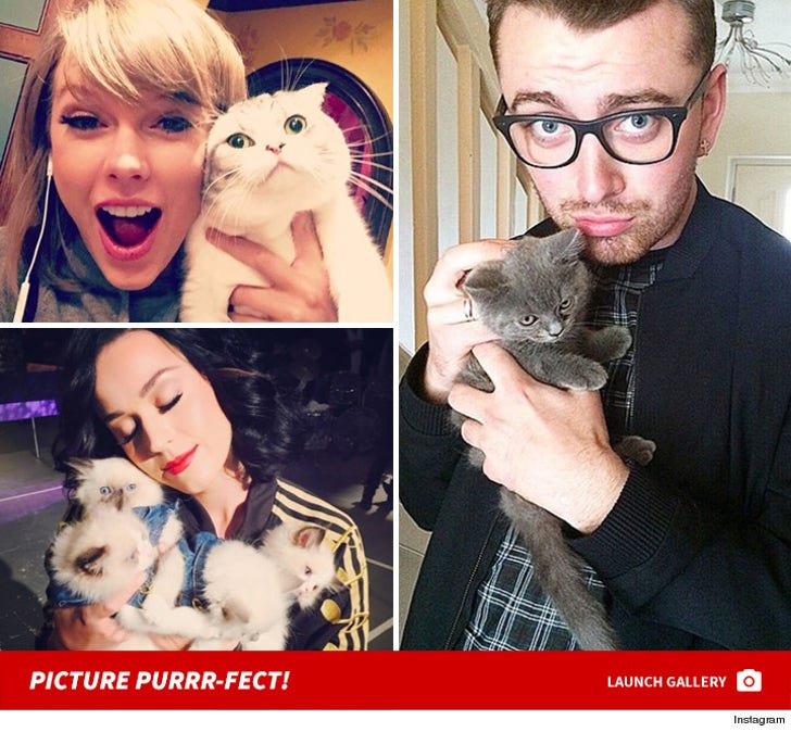 Celebrity Cat Lovers