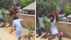 Teenager Shoves Bear Off Wall to Protect Family Dogs in Wild Video